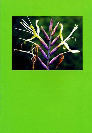 DIE BROMELIE - 1999(3) back.jpg