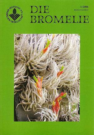 DIE BROMELIE - 2006(1).jpg