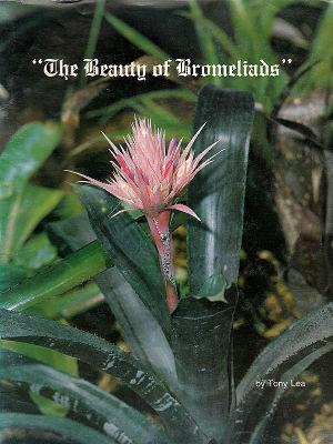Lea - The Beauty of Bromeliads.jpg