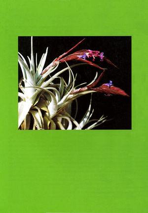 DIE BROMELIE - 2005(1) back.jpg