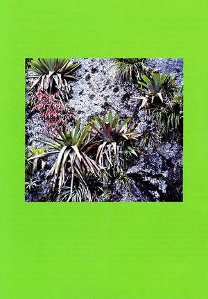 DIE BROMELIE - 2003(2) back.jpg