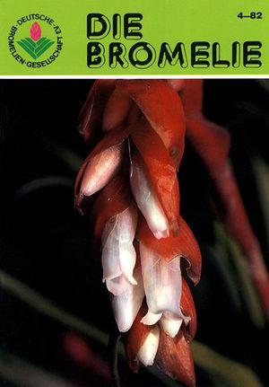 DIE BROMELIE - 1982(4).jpg