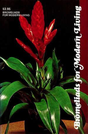 Bromeliads for modern living.jpg