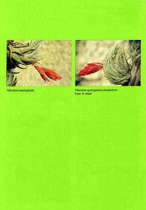 DIE BROMELIE - 1986(1) back.jpg